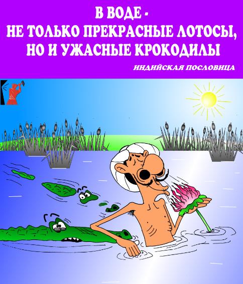 Пословицы с прикольными картинками: крокодилы