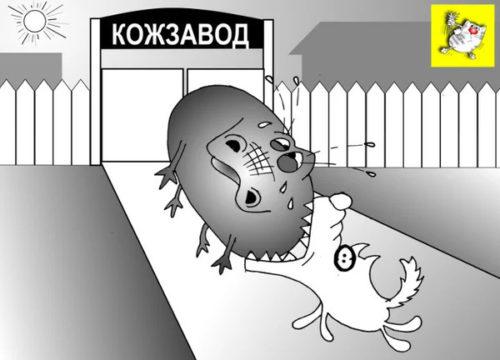 Анекдот про богатых животных в женских руках. Карикатура