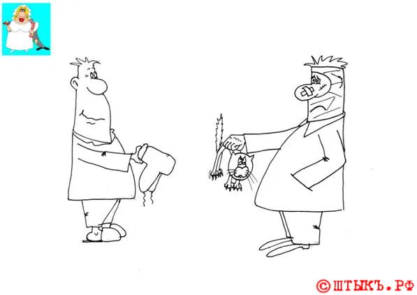 Анекдот про друзей и котофф. Карикатура
